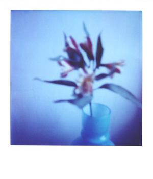 Wbblueflowers_1